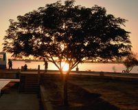 Sunset in Iraq. Sun setting over Z lake in the Iraq Green Zone behind an indigenous tree royalty free stock image