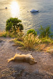 Sunset on the island of Phuket. Dog sleeps on the beach Royalty Free Stock Image