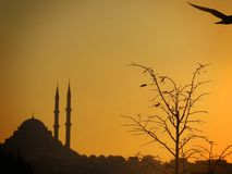 Sunset in Istanbul. History and nature Stock Photo