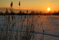 Sunset IV. Wintry season aground of pond Stock Photography