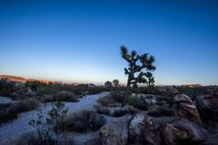 Sunset in Joshua Tree National Park Royalty Free Stock Photography