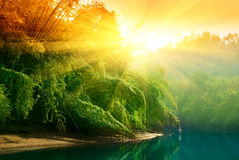 Sunset in jungle Stock Photos
