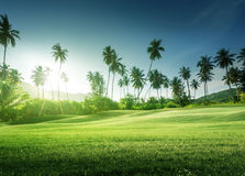Sunset in jungle and grass Stock Photography