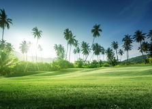 Sunset in jungle and grass Royalty Free Stock Photography