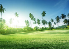 Sunset in jungle and grass Stock Images