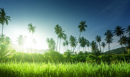 Sunset in jungle and grass Royalty Free Stock Images