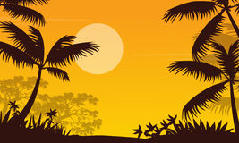 At sunset jungle landscape with palm silhouette Royalty Free Stock Images