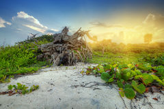 Sunset at the jungle of Mexico. Amazing sunset at the jungle of Caribbean Sea in Mexico Stock Photography