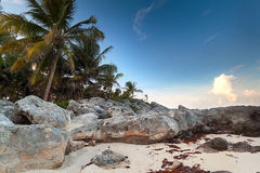 Sunset at the jungle in Mexico. Amazing sunset at Caribbean Sea in Mexico Stock Images