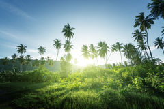 Sunset in jungle, seychelles Royalty Free Stock Photo