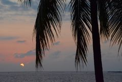 Sunset through the Palms Royalty Free Stock Photography