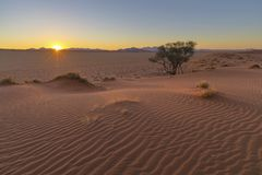 Sunset on Kalahari desert dune royalty free stock photography