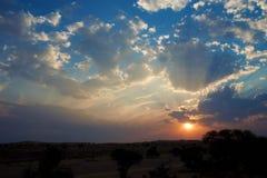 Sunset in Kalahari. Spectacular sunset in Kalahari with silhouette trees Royalty Free Stock Image
