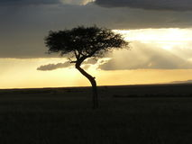 Sunset Kenia Stock Photos