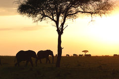 Sunset in Kenya Stock Photography