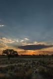 Sunset in Kgalagadi Stock Image