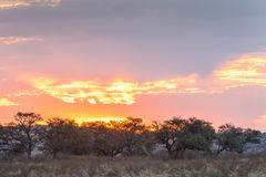Sunset in Kgalagadi Royalty Free Stock Images