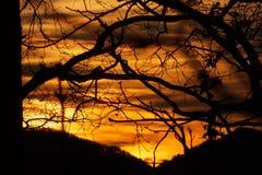sunset kosmicznymi tekstu twojego drzewa zdjęcia royalty free