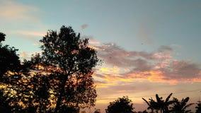 sunset kosmicznymi tekstu twojego drzewa obrazy royalty free
