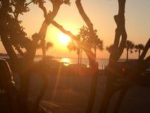 sunset kosmicznymi tekstu twojego drzewa zdjęcia stock