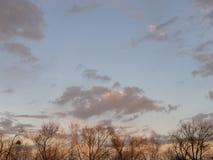 sunset kosmicznymi tekstu twojego drzewa Obraz Royalty Free