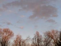 sunset kosmicznymi tekstu twojego drzewa Zdjęcie Stock