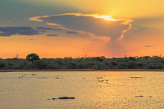 Sunset in Kruger National Park with crocodiles swimming Stock Photography
