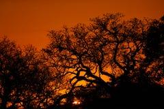 Kruger Sunset. Sunset in Kruger National Park Stock Photo