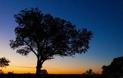 Kruger Sunset. Sunset in Kruger National Park with orange hues Royalty Free Stock Images