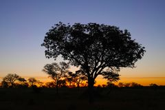 Kruger Sunset with Savanna trees. Sunset in Kruger National Park with orange hues. Savanna trees in silhouette Stock Image