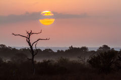 Sunset in Kruger National park, South Africa. Berg en dal landscape in Kruger National park, South Africa Stock Photo
