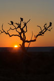 Sunset in Kruger Park Stock Photography