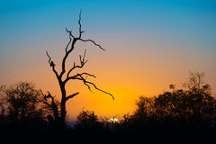 Sunset in Kruger park Stock Photo