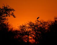 Sunset at Kruger park South Africa with marabou shilouette