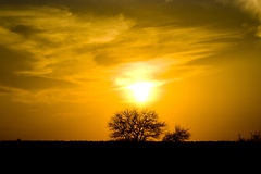 Sunset Krugerpark. Sunset in dry empty field in Krugerpark with orange air and a tree Stock Photo