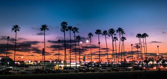 Palm Tree Sunset in Tampa Florida. TAMPA, FLORIDA - MARCH 8, 2016 - A display of palm trees during sunset on March 8, 2016, in Tampa, Florida royalty free stock photography