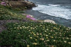 San Diego California Coastline in Spring. Sunset in La Jolla California USA royalty free stock image