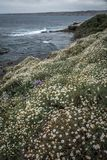 San Diego California Coastline in Spring. Sunset in La Jolla California USA royalty free stock photography