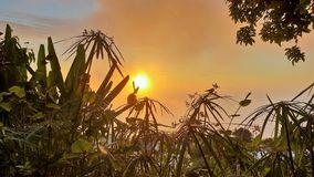 Sunset on la reunion island with plants in foreground royalty free stock photography