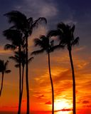Sunset at lahaina. Beach in maui Stock Image