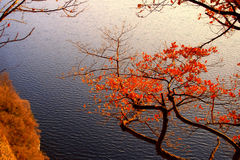 Sunset on the lake. From a cliff with red autumn leaves Stock Photos