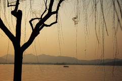 Sunset at the lake. With a tree in the front Royalty Free Stock Image