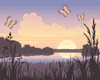 Sunset on the lake. And butterfly Stock Image