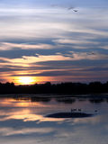 Sunset by the lake. Sun setting over a lake royalty free stock photo