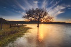 Sunset in a lake in Alava. Tree in the lake at Sunset in a lake in Alava Royalty Free Stock Image