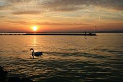 Sunset at Lake Balaton. Sunset with a swan in the foreground at Lake Balaton, Hungary stock photos