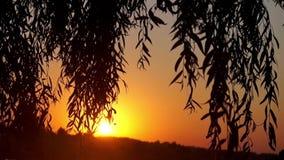 Sunset at the lake. Beautiful view near tree. stock footage