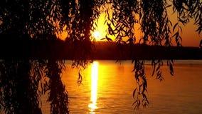 Sunset at the lake. Beautiful view near tree. stock video
