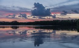 Sunset in lake of Everglades National Park royalty free stock photo