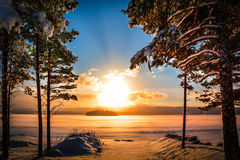 Sunset with a lake and pine trees in the foreground Stock Images